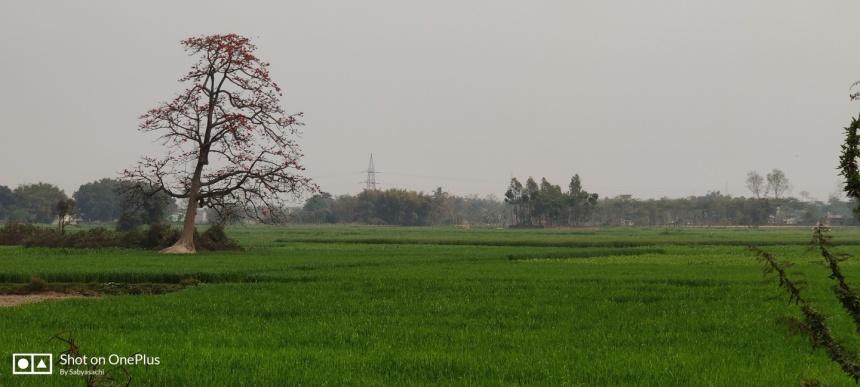 A paddy farm