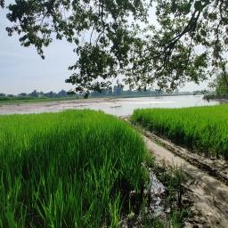 अपने अस्तित्व को बचाने के जद्दोजहद में अररिया जिले के आत्मनिर्भर ग्रामवासी
